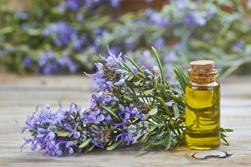 Preparation Oil Rosemary Mediterranean