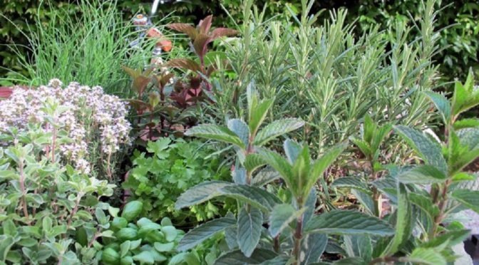 Aromatic Plants To Grow At Home